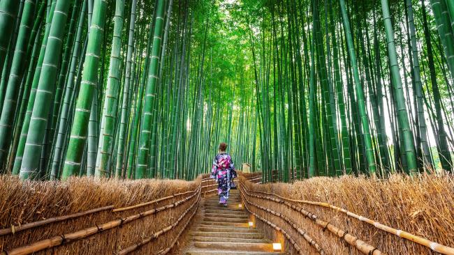 Kyoto, Japan See a traditional side of Japan with your significant other, bonding over what you discover there. Activities to do together in Kyoto could include visiting the bamboo forest (pictured), taking a hike in its surrounding forest, booking yourselves in for a tea ceremony with a maiko, getting outrageously drunk on sake and doing karaoke (warning: love might be blind, but it's usually not deaf) or booking yourself in for a luxe-y ryokan stay (we have some suggestions here).