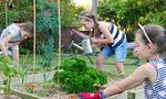 How to build a salad garden in your own backyard