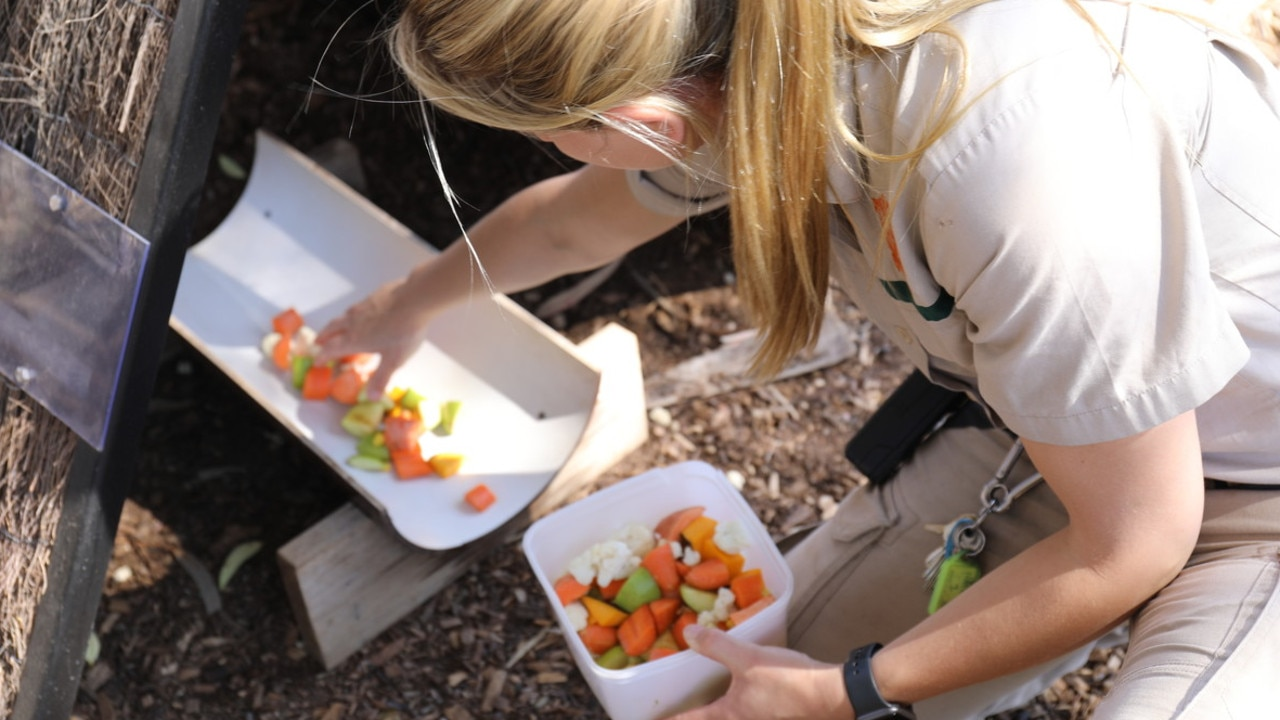 Putting out a meal for some of the animals. Picture: Zoos Victoria