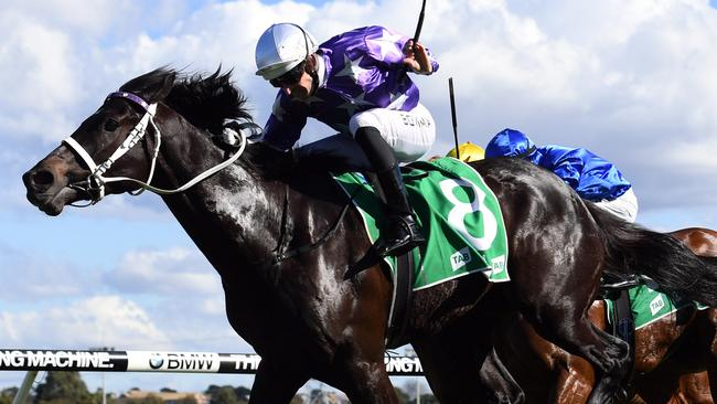 Jockey Hugh Bowman gave Calculated a big rap after its first-up win at Canterbury. Can the pair strike again at Rosehill on Saturday?