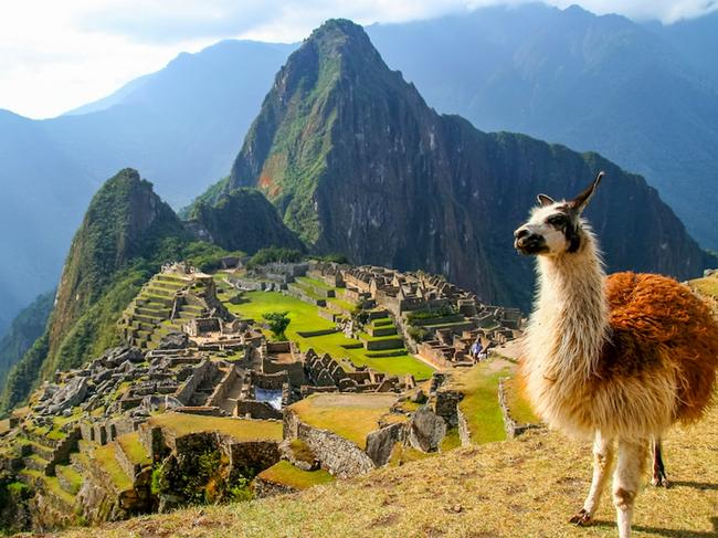 PERU 15-DAY PACKAGE, $7880 Solo travellers can book the trip of a lifetime and save the $1880 single supplement on the 15-day Panoramic Peru itinerary, priced from $7880 a person including return flights from Australia. The roundtrip from Lima will take you to Cusco, the Sacred Valley, Ollantaytambo and the start of the famous Incan Trail to explore Machu Picchu. Book by February 29, 2020, for a package that also includes all accommodation, some meals, touring with local guides, entrance fees, all transportation and transfers. wendywutours.com.au