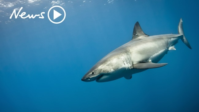 Shark Attack Season: Should Australia be shark culling?
