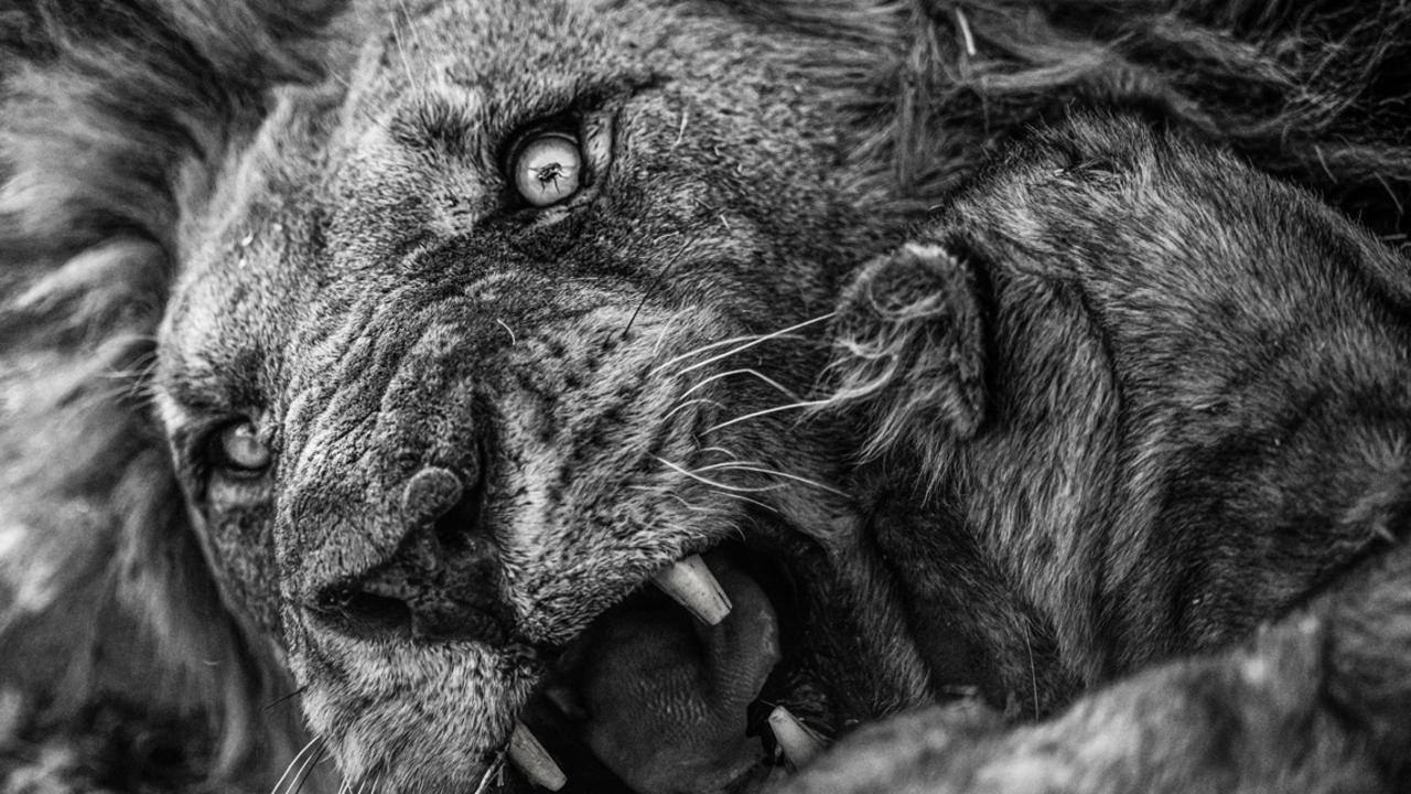 Supplied  Africa Geographic Photographer of the Year 2021. Picture: