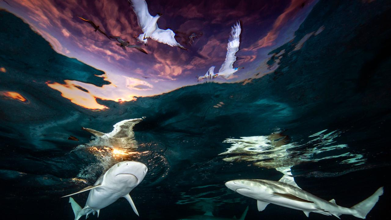 The image that won its creator Underwater Photographer of the Year 2021. Picture: Renee Capozzola/Underwater Photographer of the Year Awards 2021