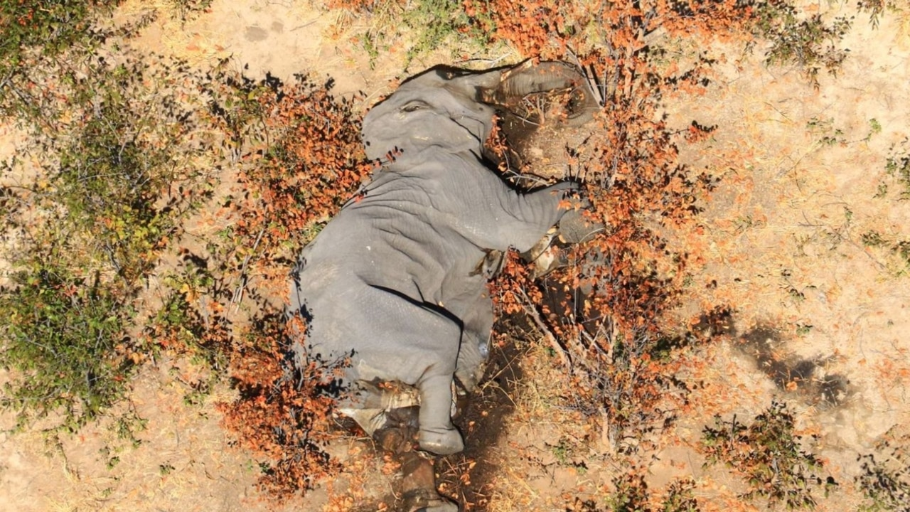 Investigation launched into spike in elephant deaths