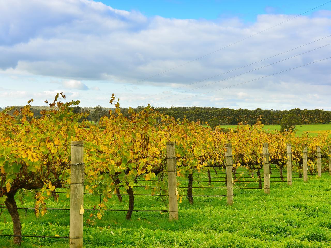 The Margaret River is WA's premier wine region.