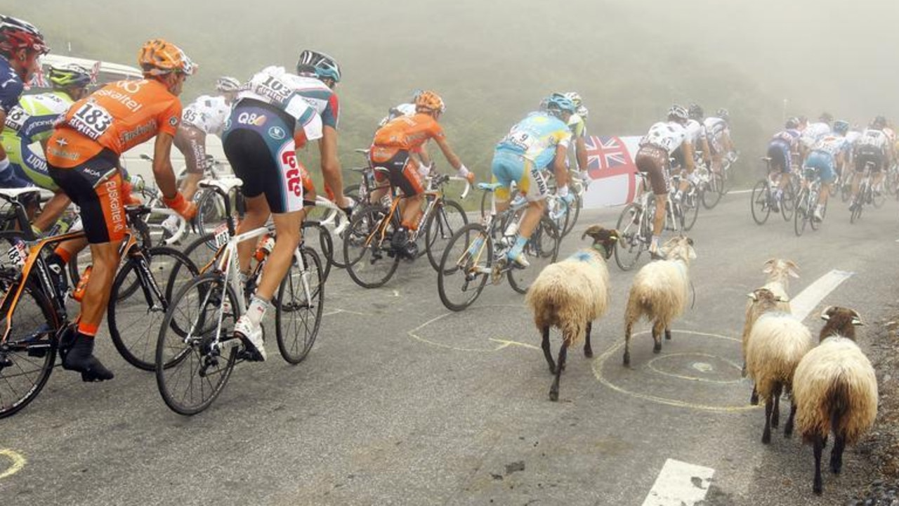 The pack of riders cycles past sheep during the 17th stage of the Tour de France cycling race from Pau to Tourmalet Pass, July 2010. REUTERS/Bogdan Cristel