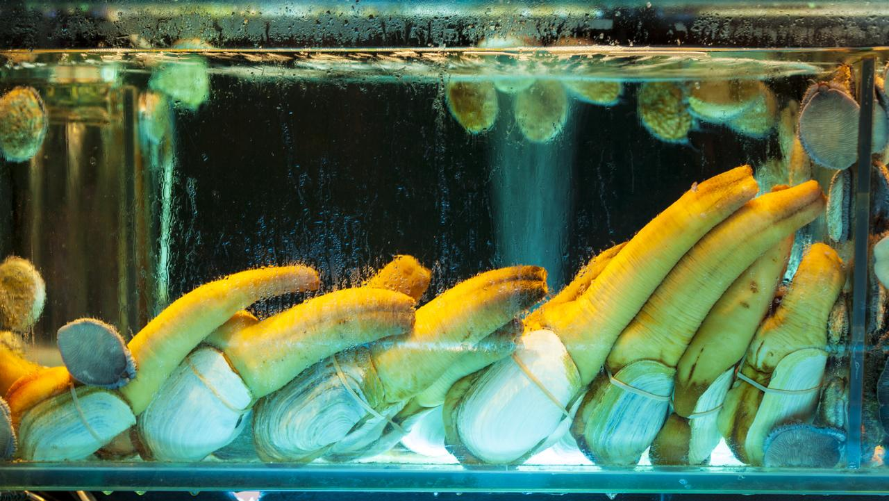 Geoducks on display in a Hong Kong restaurant aquarium with abalone