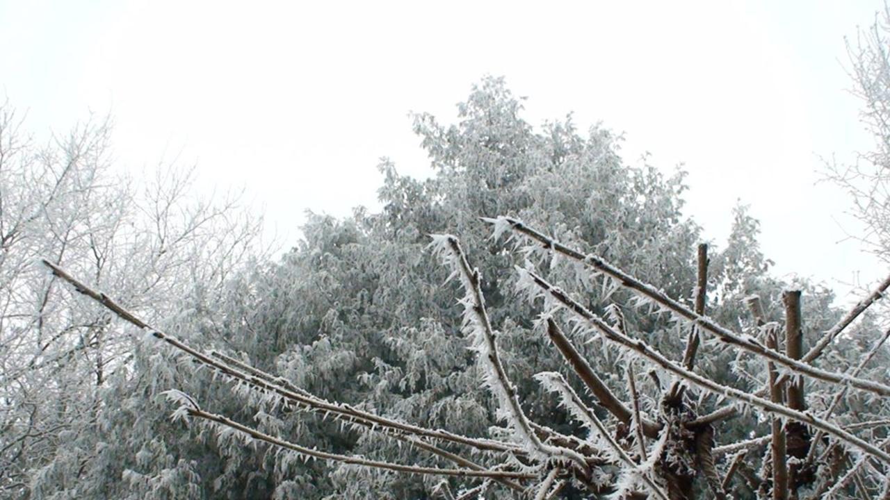 Jan had an album on Facebook for photos of trees around him. Picture: Facebook/Jan Zon van Dorsten