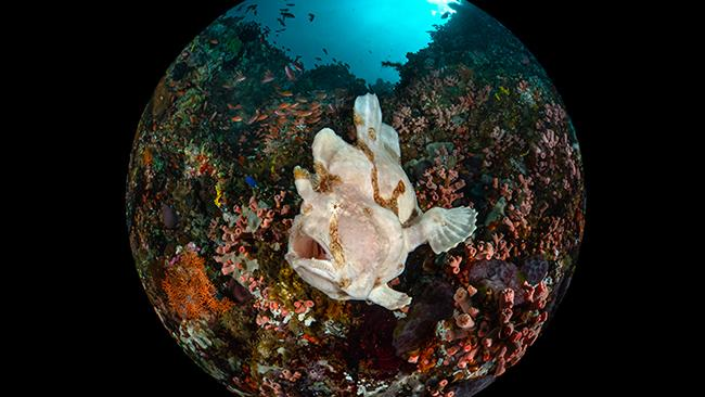 42/42Luzon Island, PhilippinesA giant frogfish camouflages among the coral reefs of Anilao in the Batangas Province of Luzon Island, Philippines. Picture: Enrico Somogyi/Ocean Art 2020 See also:- Incredible photos show world from above- NASA reveals its top 20 photos of Earth from 2020- Around the world in 50 stunning photographs