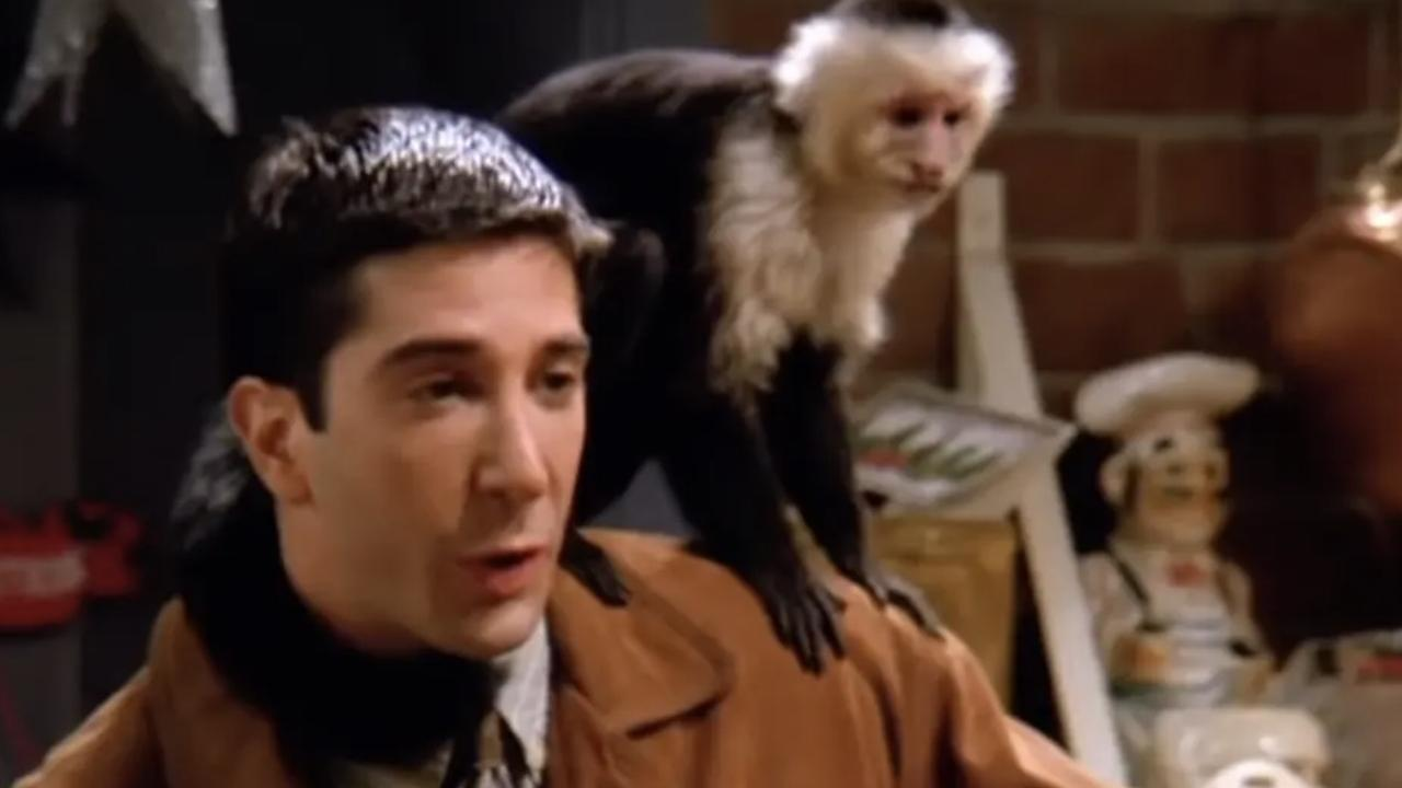 David Schwimmer with Marcel the monkey.