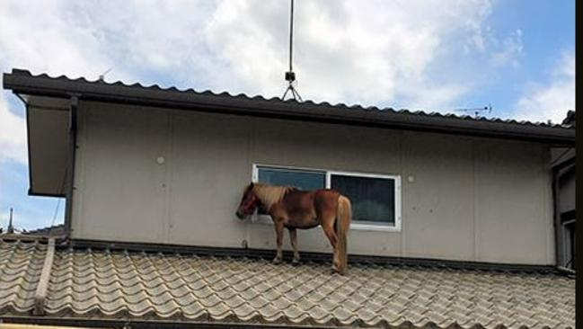 Not something you see every day. Picture: Courtesy of Peace Winds Japan