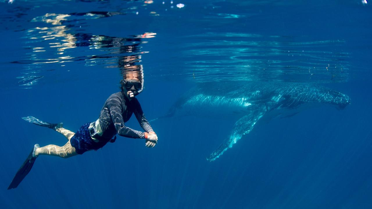 Humpback whale tours at Ningaloo Reef. Picture: Rory Hodgkinson & Prue Wheeler/Coral Bay Eco tours