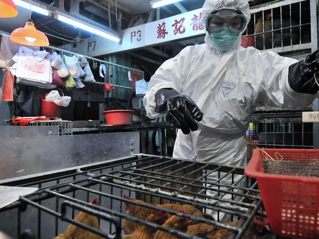 Staff wearing protective clothing as they cull chickens in China.