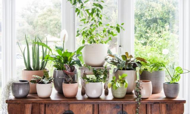 Ideas to repot discovery garden plants