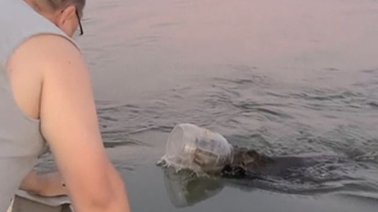 The couple spotted the bear swimming in the lake.