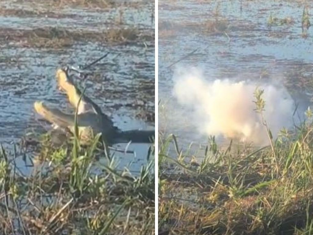 Smoke started pouring out of the alligator's mouth as he chomped on the drone. Picture: @devhlanger/TikTok