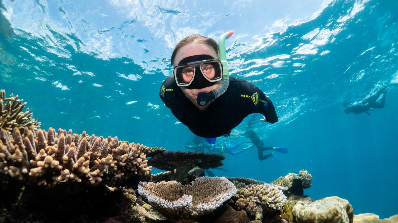 Incredible scenes on the Great Barrier Reef at Reef Magic Cruises Marine World. Picture: Brad Fisher/Ikatere Photography