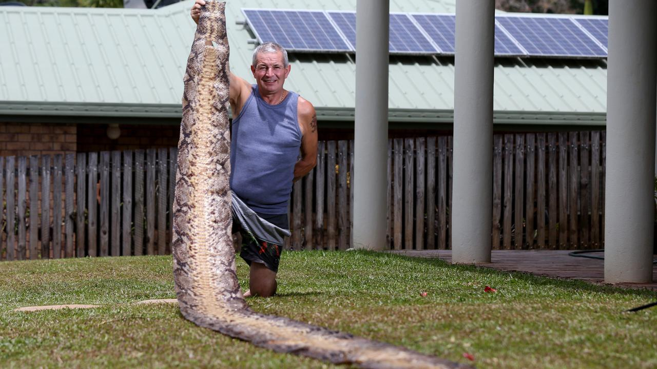 Stuart Morris with the massive python skin he found in a Cairns park. Picture: Stewart McLean