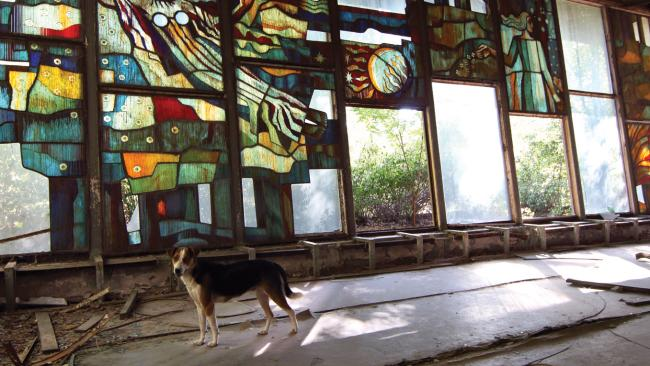 Pripyat Café. This building and its striking stained-glass windows are currently being preserved by a privately funded project. The city is still home to numerous stray dogs, descendents of pets left by evacuees, who are often fed by tourists. Picture: Darmon Richter/FUEL Publishing