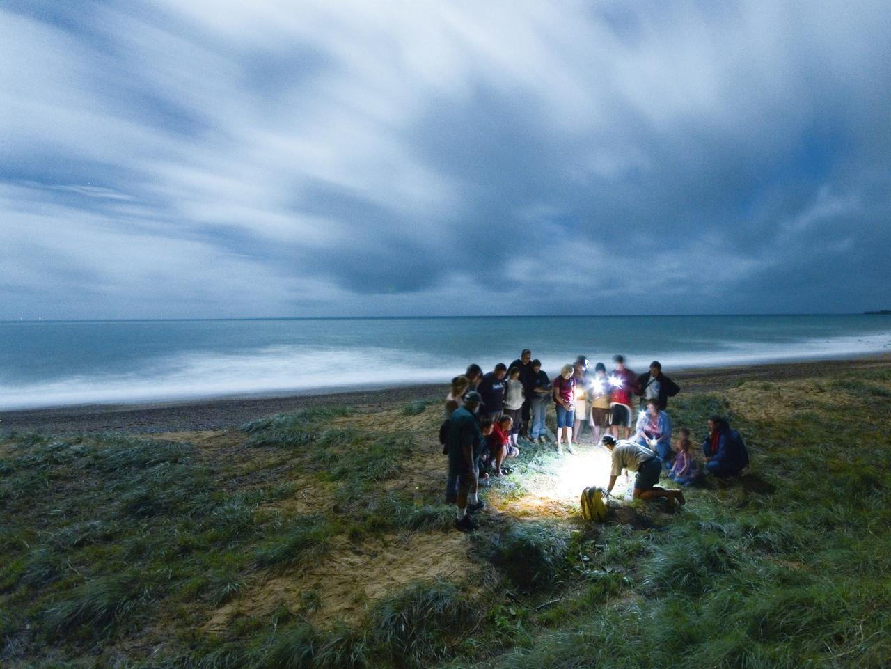 ESCAPE: LADY ELLIOT ISLAND .. Jeremy Pierce story .. tourists watch the action around a turtle nest at Mon Repos. Picture: Supplied