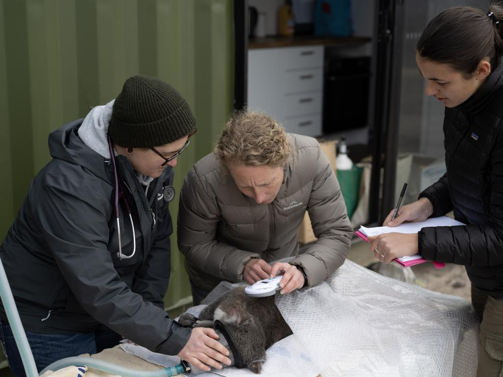 Dr Jelaena Vakcevic, Dr Karen Ford and Murraya Lane continuing koala research near Two Thumbs after devastating fires. Picture: James Walsh at The Australian National University