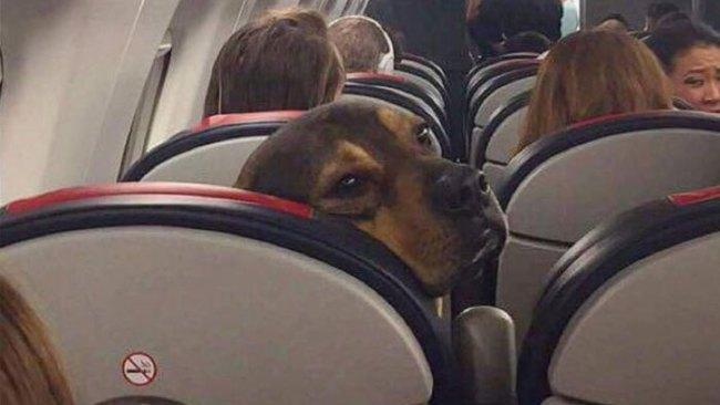 """""""When you wake up and the food trolley is four rows behind you."""""""