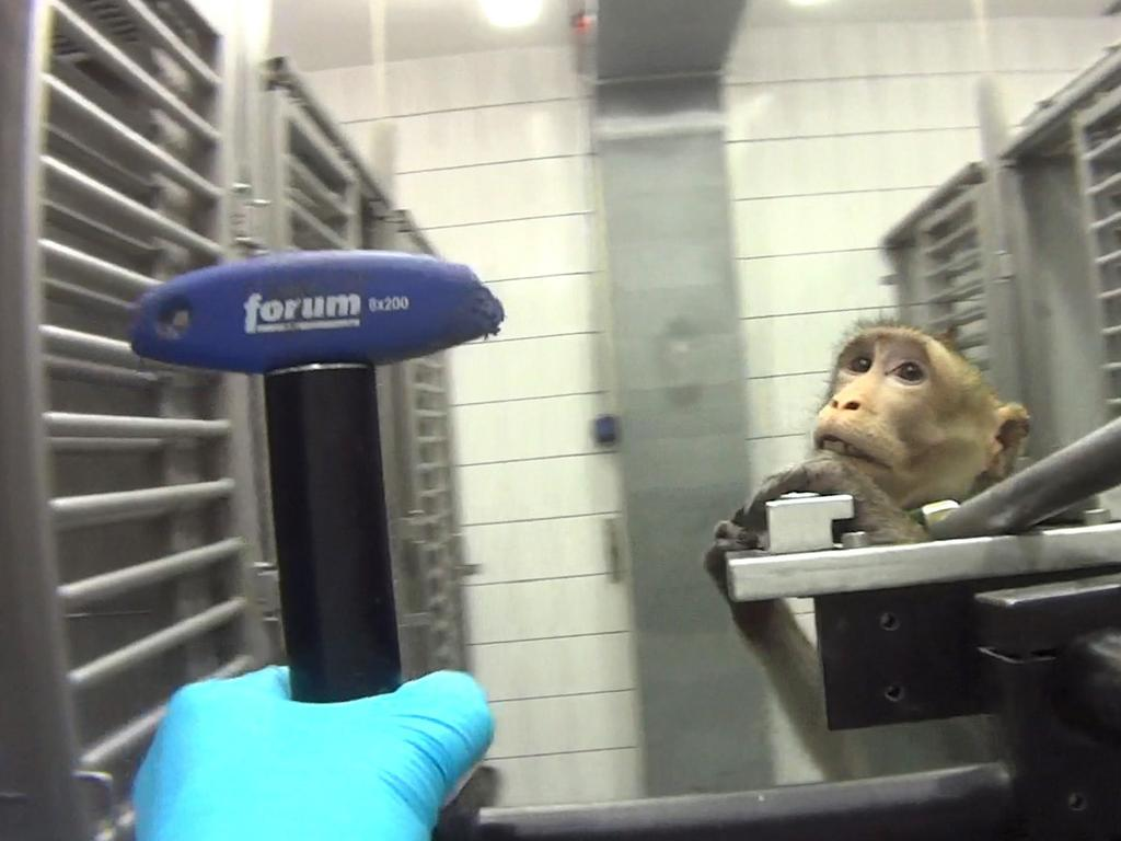The Hamburg Higher Administrative Court allowed operations at the Hamburg location again in mid-July. Picture: Cruelty Free International/Newsflash/australscope