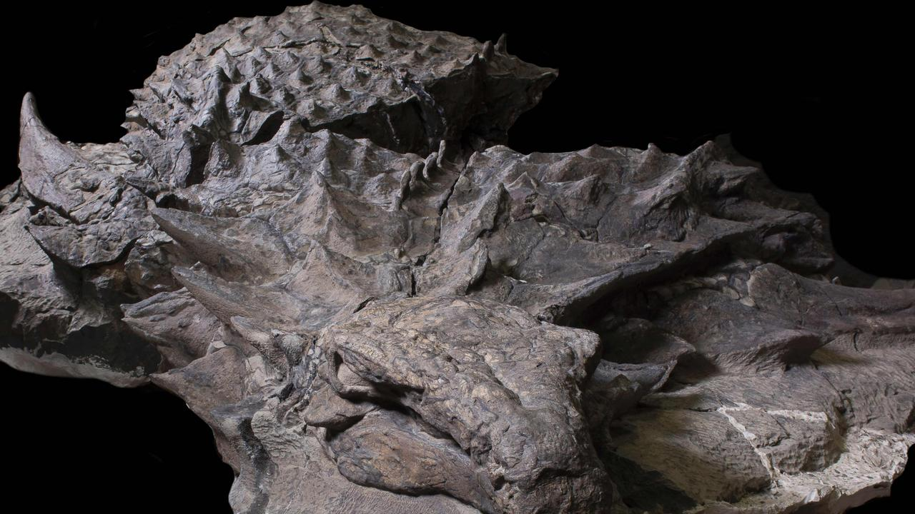 Despite heavy armor, new dinosaur used camouflage to hide from predators