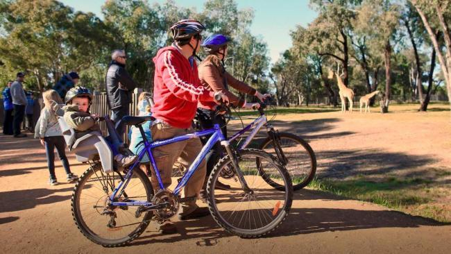 8/15Taronga Western Plains Zoo safari At Taronga Western Plains Zoo in Dubbo (approx. five-hour drive from Sydney), you can see the zoo from a different perspective by exploring on a bike or a self-drive cart. Setting out on two wheels allows you to travel smaller trails and the terrain is largely flat, making it an easy ride for most. Cool off afterward with a visit to the newest enclosure, the Waterhole, where kids can frolic under water jets.