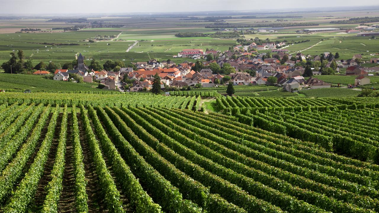 Thousands from all over the world come to taste and visit the farms of Burgundy.