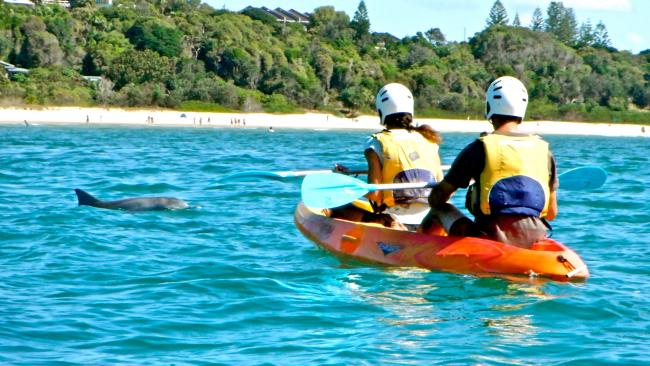 3. Kayak with dolphins, NSW Spotting marine life from the shore is cool – but paddling out into the great blue of Cape Byron with dolphins popping up alongside you is even cooler. The next time you find yourself in NSW's easy-living capital, set out to sea with one of the qualified coastal guides of  Go Kayak. Along with friendly dolphins, eagle-eyed kayakers can often spot turtles and manta rays. If you're paddling between May and September, humpback whales up to 15 metres in length can pass within metres of your kayak while you're out on the bay. What's more, if you return to shore and you haven't seen anything, your entire group gets to go on another kayaking tour for free.