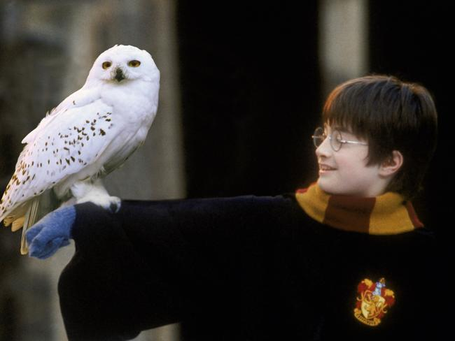 This owl was cast before Daniel Radcliffe.