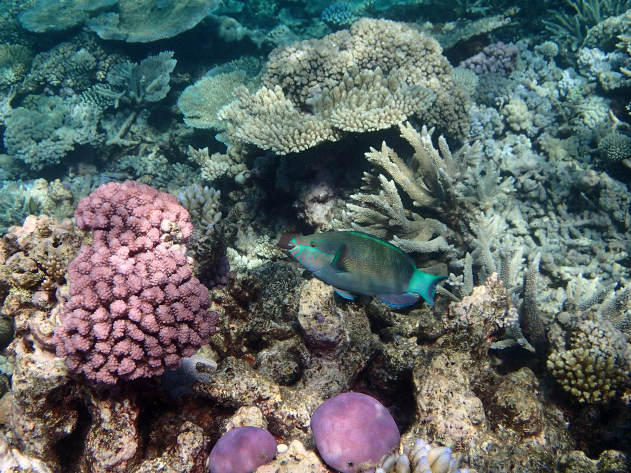 Supplied Travel Great Barrier Reef - image 3 of 4