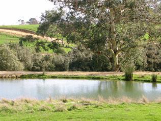 GREENHOOD ORGANIC FARMS Timboon Property: herbs Size: 10 blocks