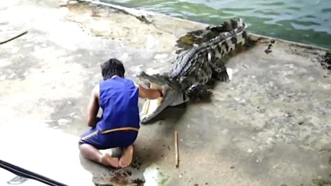 Don't try this at home with a crocodile