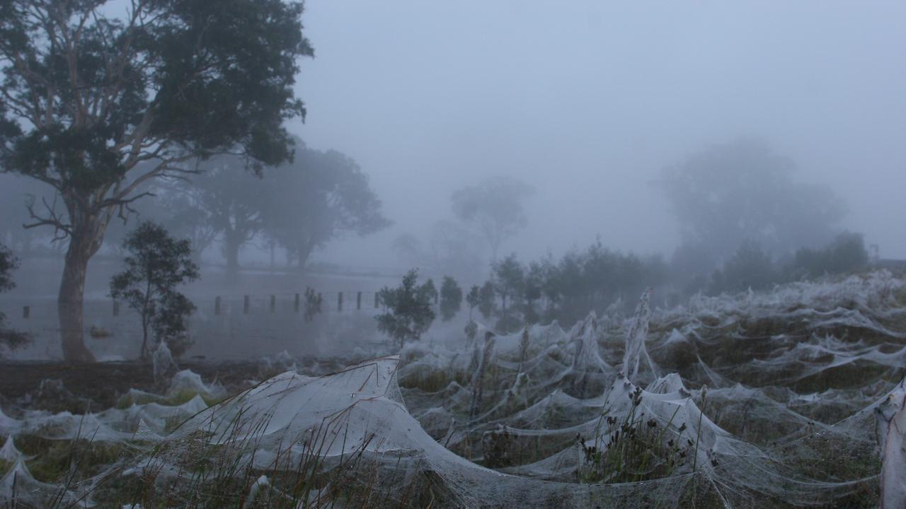 You may look at this and think it looks like very pretty frost. It's actually spider webs. Heaps and heaps and heaps of spider webs. Time to vacate the area, stat. Picture: Fiona Allen/News Corp