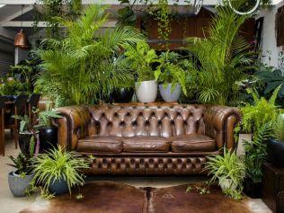 Plant Life Balance indoor plants biophilia