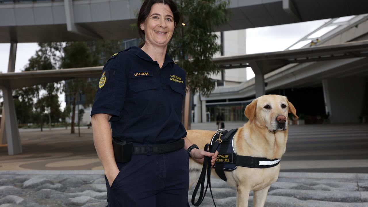Covid Detector Dog Trial