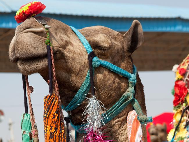 """TRY:Bunnik Tours' """"Colours of Rajasthan, Pushkar Festival"""" tour. On the tour, you'll dine with a local family and learn timehonoured cooking techniques, meet a local palmist who'll read your destiny based on Indian astrology, ride a camel in the Thar Desert and watch the sun rise over the Taj Mahal."""