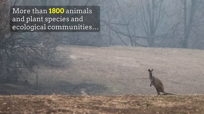 Black Summer bushfires an ecological disaster