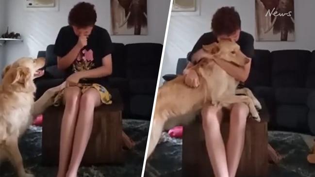 Autism service dog calms owner having panic attack