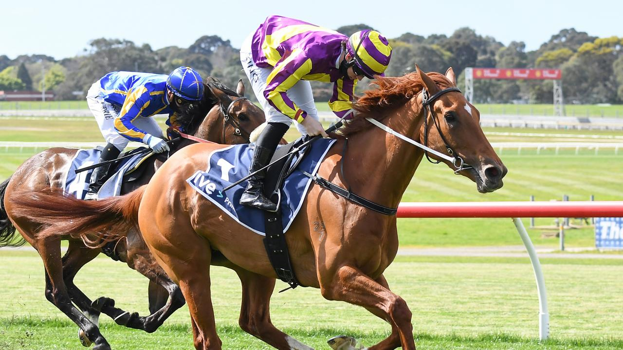 Succeed Indeed runs at Flemington this Saturday on a potential path to the Queensland Oaks, Picture: Racing Photos via Getty Images