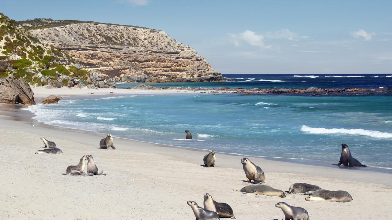 Come face-to-face with some of the friendly locals. Picture: SATC