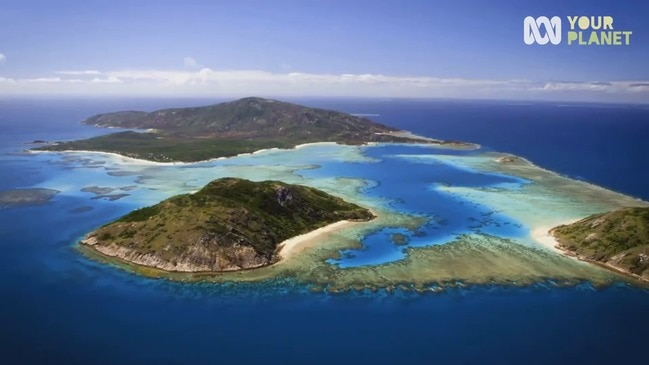 Great Barrier Reef's spawning to be shown live - trailer
