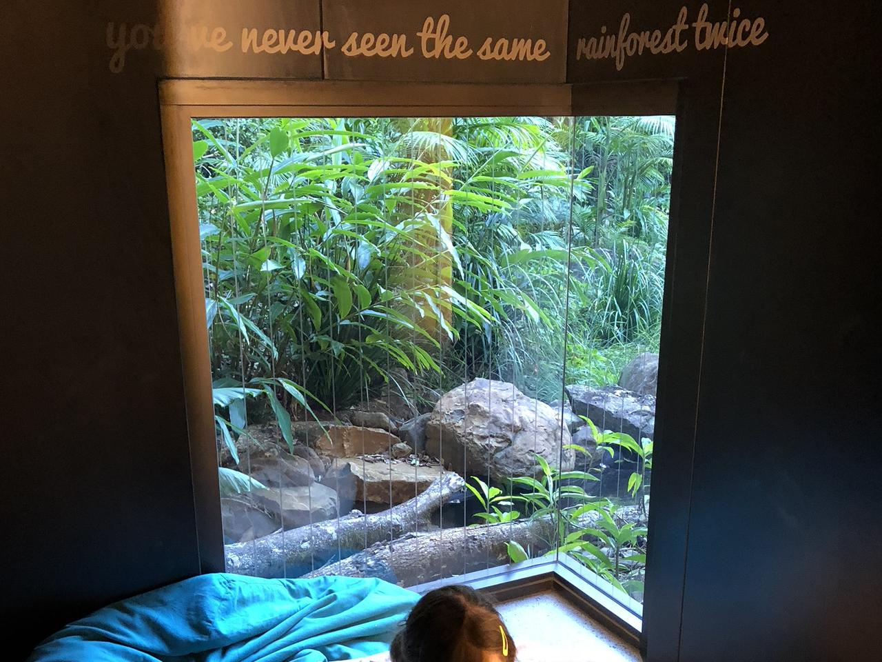 Mary Cairncross Scenic Reserve Rainforest Discovery Centre. Picture: Melinda Browning