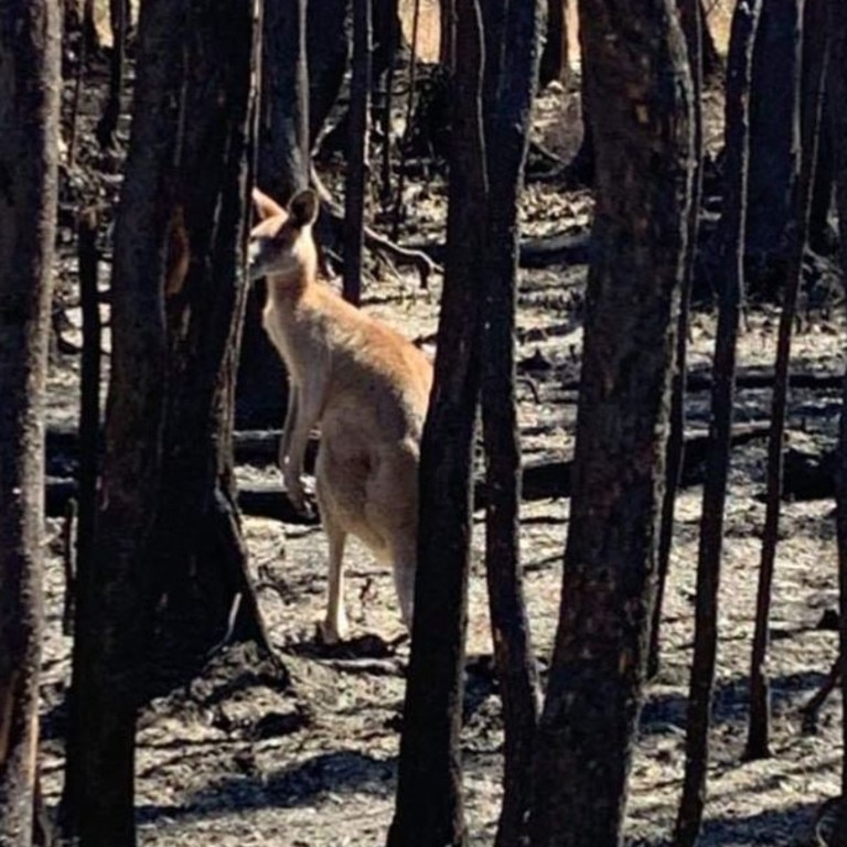 Rescuers have warned surviving animals will need assistance. Picture: The Rescue Collective