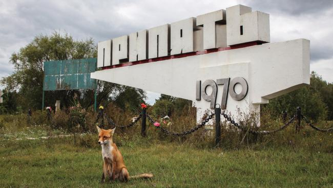 A tame fox poses in front of the sign pointing the way to Pripyat from the Chernobyl Nuclear Power Plant. Picture: Darmon Richter/FUEL Publishing