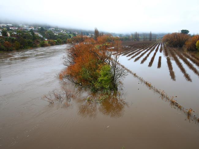 The River Derwent breaks its banks in New Norfolk. Picture: SAM ROSEWARNE