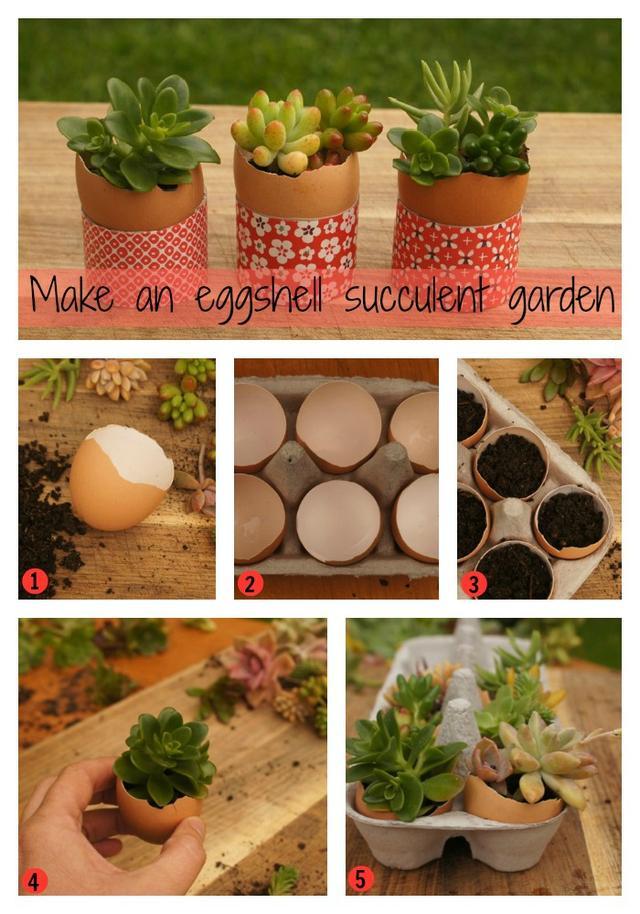 EggshellSucculentCollage1.jpg